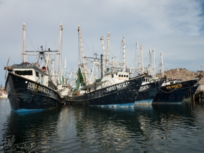 Shrimp Boats in the harbor